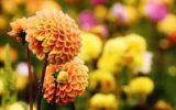 4 tipy pre malé záhrady
